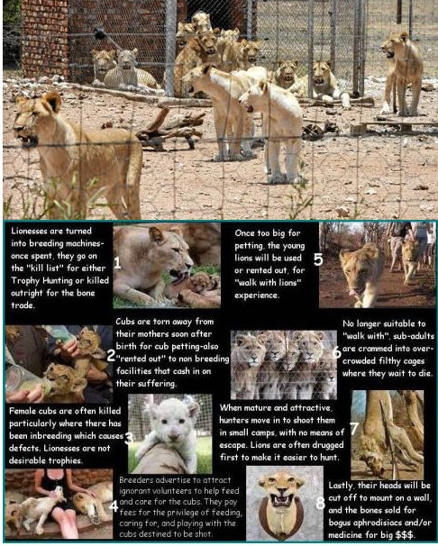 Raising Awareness About Canned Hunting (2/3)