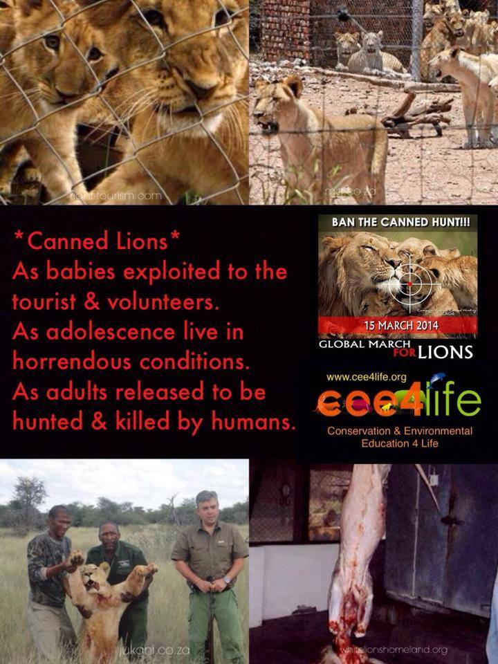 Raising Awareness About Canned Hunting (3/3)